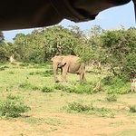 Ruhunu Safari Camping