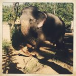 Photo of Elephant Freedom Project