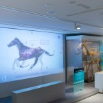 The Maktoum Gallery of the Thoroughbred in the National Horseracing Museum