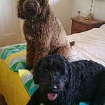Relaxing on our holiday at must love dogs b&b. Rutherglen