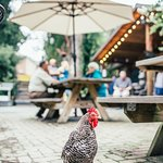 One of our feathered friends keeping an eye on the courtyard. Photo Credit: Sam Dean photography