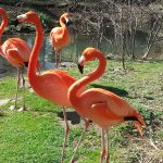 The Flamingos were out enjoying the day!