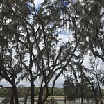 Photo of Skidaway Island State Park