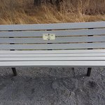 Gordons Pond bench--there are several