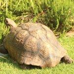 hotel tortoise