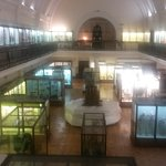 Horniman Natural History Gallery