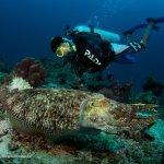 Diving Mabul, Sipadan