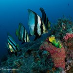 Diving Mabul