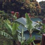 Photo de Les Bananes Vertes