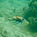 Amuri Sands, Aitutaki Foto