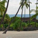 Palm shelter