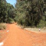 cycling/walking paths