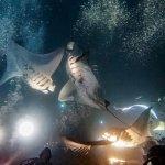 Manta night dive! w/ Leao, Evan, Mikey, Ryan