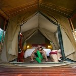 Tree house accommodation tented bedroom in Knysna, Garden Route