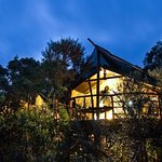 Tree house accommodation in Knysna, hidden in the indigenous forest