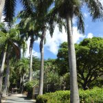 Palm trees by tmhe main entrance