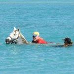 Foto de Horse Ranch Bonaire