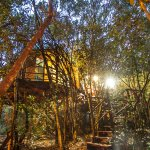Tree house acccommodation in Knysna