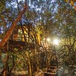 Teniqua Treetops Foto