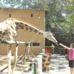 Foto de Vallarta Zoo