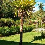 Photo de Hotel Playa Espadilla