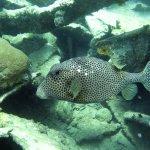 Photo of S.E. Aruba Fly 'n Dive