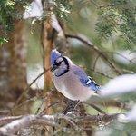 oiseaux du domaine