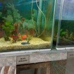 The aquarium inside the museum