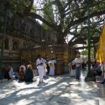 Bodh Gaya - the Bodhi Tree where the Buddha was Enlightened