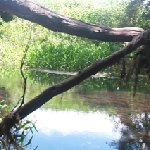 Panorama of the creek behind the park. Ask Pat how to get there, it's worth a look.