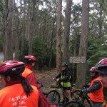 Photo of Mt Wellington Descent Bike Ride