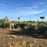 Fairmont Mara Safari Club Foto