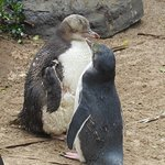 Did you hear the one about... Penguin Place