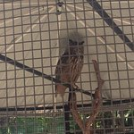 1 of 2 large owls in this cage. The shy one.