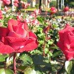 バラ園の花1