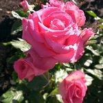 バラ園の花2
