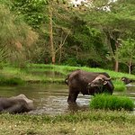 Photo de Mount Meru Game Lodge & Sanctuary