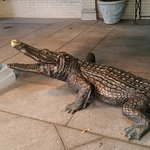 Alligators once lived in the lobby and outdoor fountains