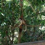 Foto de Parque Ecologico Januari