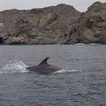 Delfines en punta de choros