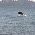 Breaching Humpback whale!!!