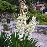 Foto di Palazzo e Giardini Botanici di Balchik