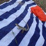 Gecko visiting...