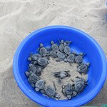 Turtles are awake and ready to be released