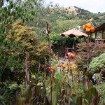 deck garden studio