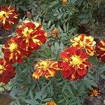 Photo de Company Garden