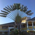 La maison du propriétaire et son super palmier