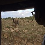 The Maasai Mara & Magical Kilima Camp