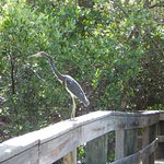 Meet many Florida Natives on our trail