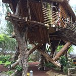 The treehouse!